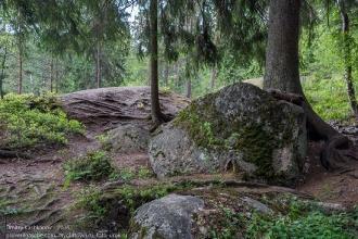 Скальный парк Монрепо. Огромные валуны и корни деревьев на поверхности