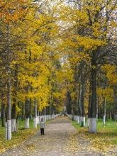 Аллея парка в желтых листьях. Фото