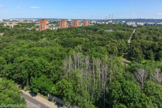 Сухие деревья в Автозаводском парке. Здесь могут построить аквапарк. Фото