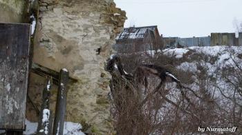 Фотографии разрушенной мельницы. Псков. Неелово