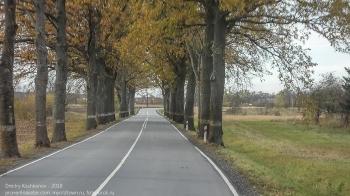 Дорога в Правдинск. Деревья вдоль дорог