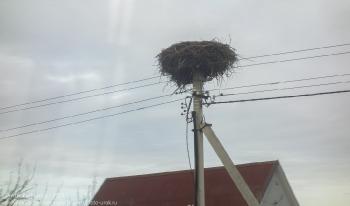 Гнездо аиста на проводах