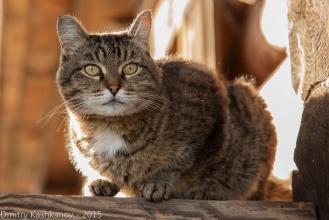 Кошка Муська. Живой талисман музея