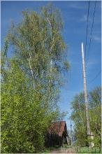Гороховец. Улица пролетарская, 14. Деревянный дом и береза